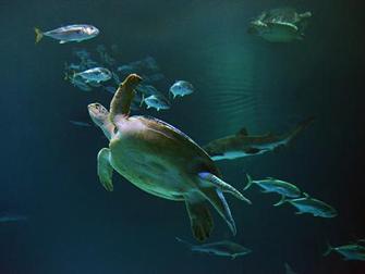 Hotel Mandalay Bay em Las Vegas - Shark Reef Aquarium