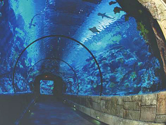 Hotel Mandalay Bay em Las Vegas - Shark Reef Túnel
