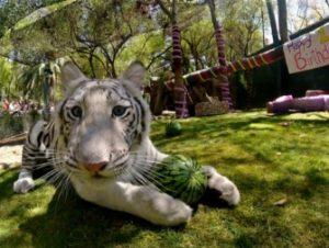 Siegfried and Roy's Secret Garden and Dolphin Habitat em Las Vegas