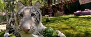 Siegfried and Roy's Secret Garden and Dolphin Habitat em Las Vegas